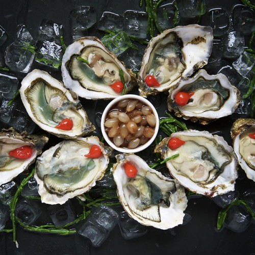 Shellfish oysters